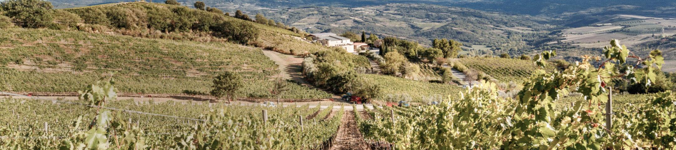 2016 Brunello di Montalcino