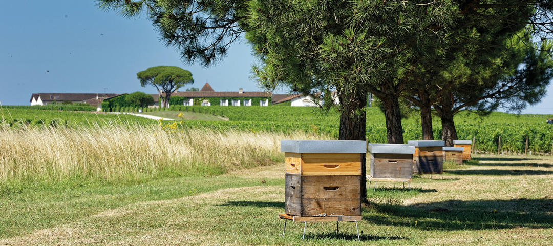 Bee hives line the edge of a vineyard.