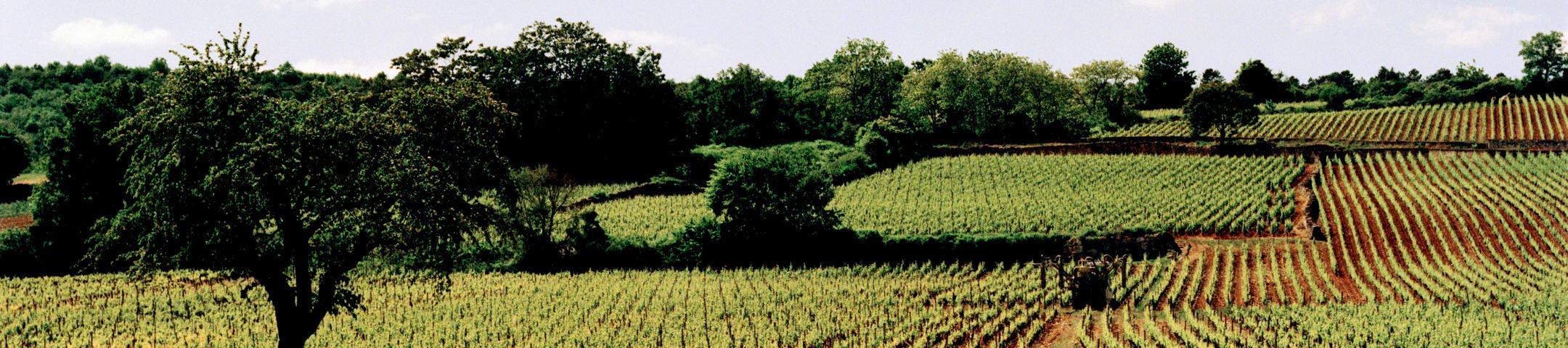 Burgundy 2019 En Primeur