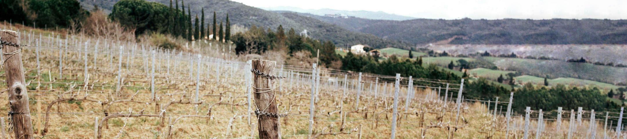 2016 Brunello di Montalcino vintage report