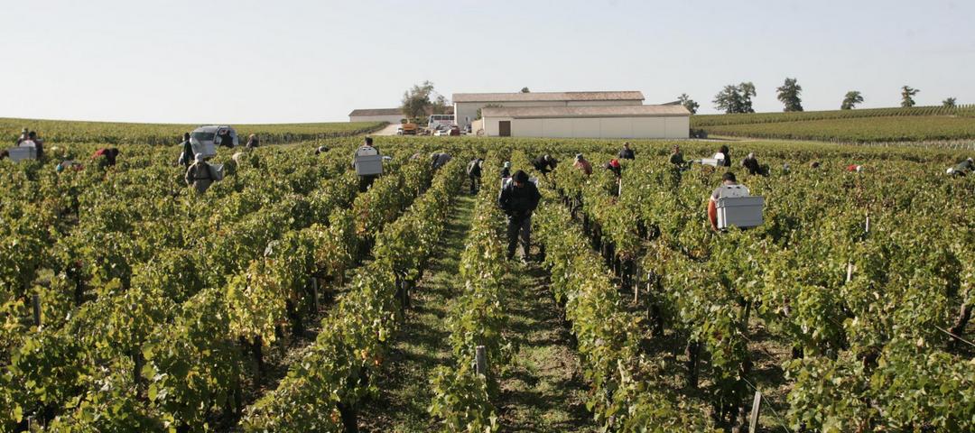 Workers in the vineyard at  Domaine Thibault Liger-Belair