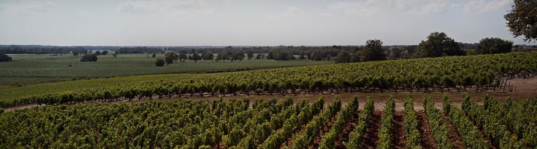 Bordeaux 2017 En Primeur