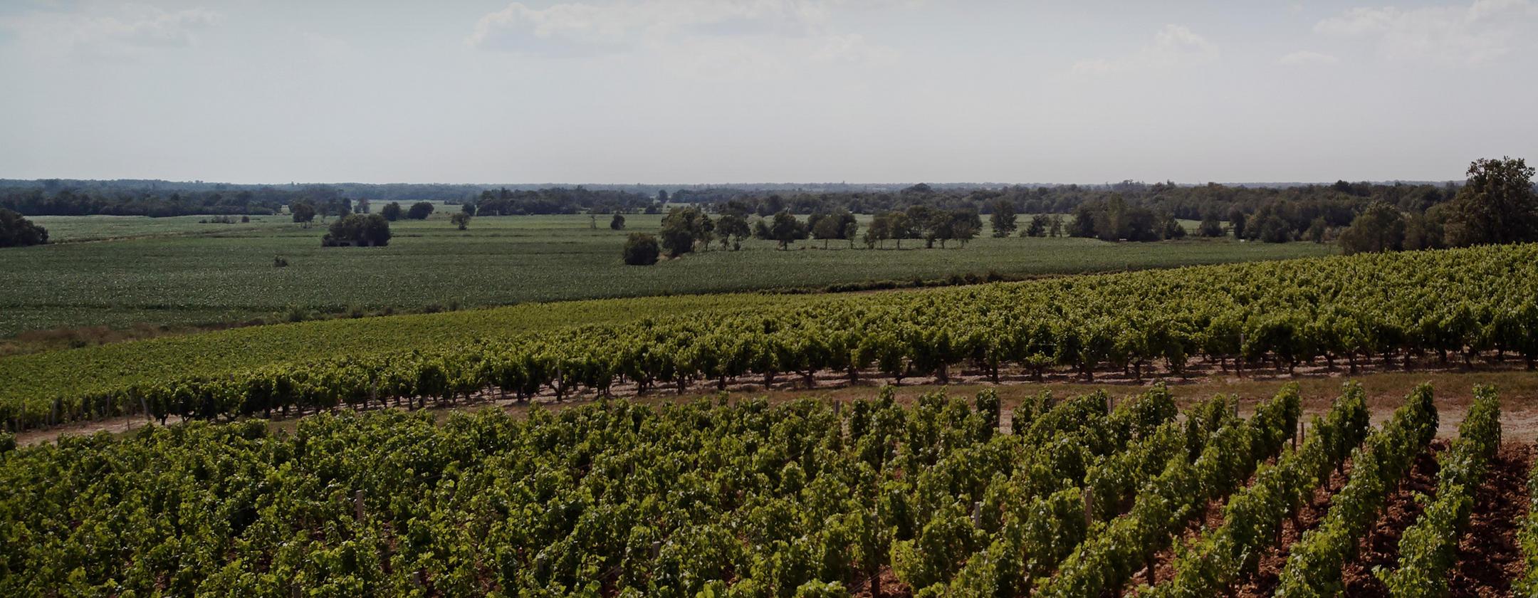 The critics' choice _ Bordeaux 2019 En Primeur