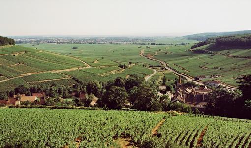 Burgundy 2018 En Primeur