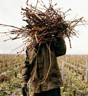 Les Vignes Oubliees