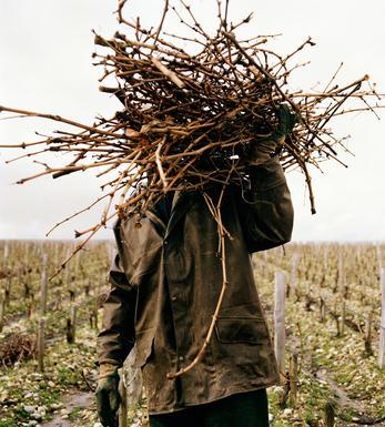 Caymus Vineyard