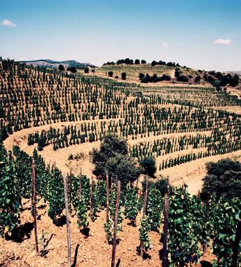 Castilla La Mancha - Castilla y Leon