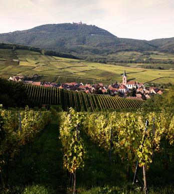 Grand Cru Alsace