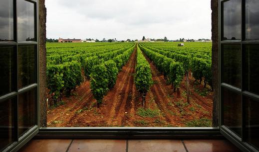 Bordeaux 2016 - A spotlight on an extraordinary vintage
