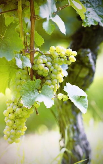 WSET Level 2 Award in Wines, Saturdays, September - October 2019