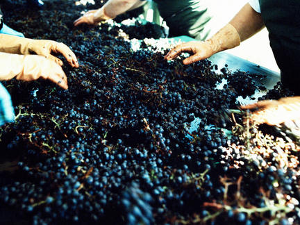 One-Day Burgundy Wine School, Saturday 30th November 2019