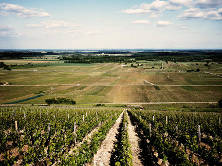 Favourite Burgundy Vineyards Lunch, Friday 4th October 2019