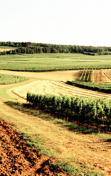 Introduction to Burgundy, Thursday 30th January 2020