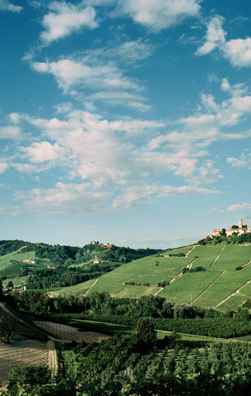 Wines of Piedmont, Wednesday 15th July 2020