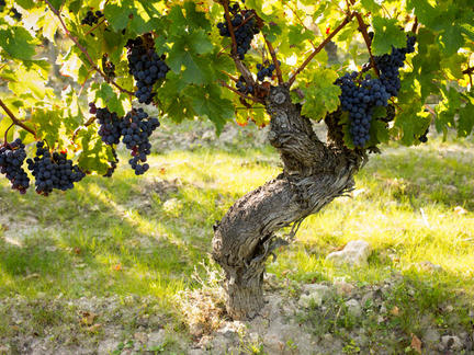 Wines of the Loire, Friday 17th July 2020