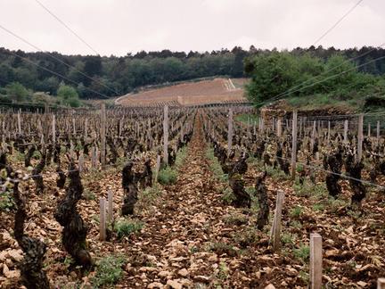 One Day Burgundy Wine School, Saturday 1st February 2020