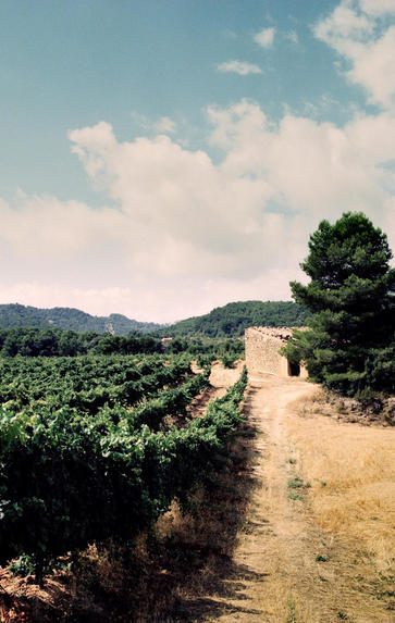 Great Wines of Spain Lunch, Friday 20th March 2020