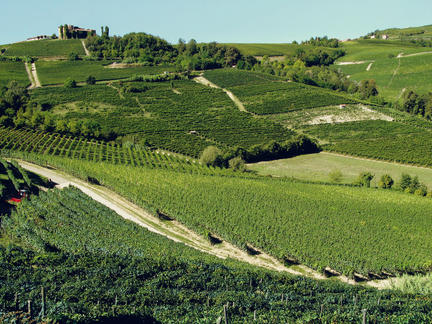 The Terroirs of Barolo, Friday 15th May 2020