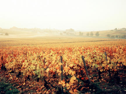 Introduction to Burgundy, Tuesday 3rd November