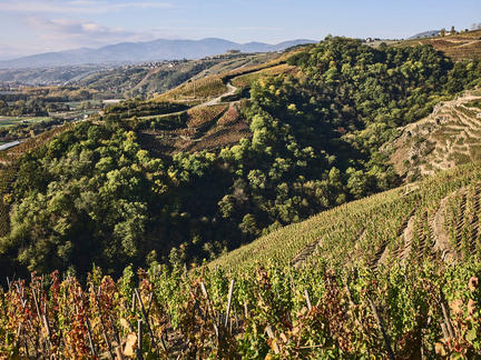 Introduction to Rhône, Tuesday 1st December 2020