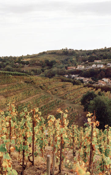 Introduction to Burgundy, Thursday 28th January 2021