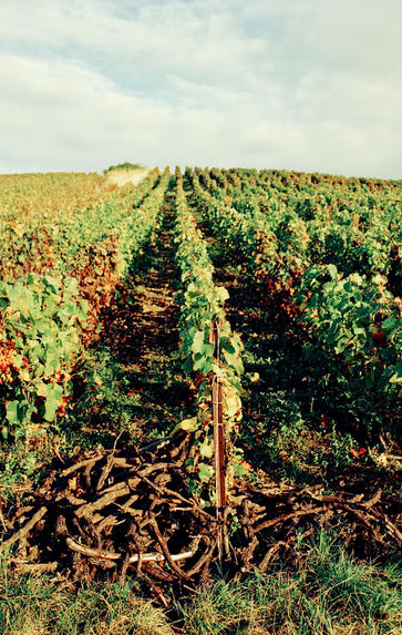 Meursault, Puligny and Chassagne, Wednesday 10th February 2021