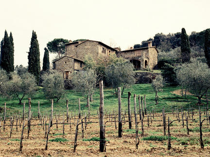 Wines of Italy, Tuesday 2nd March 2021