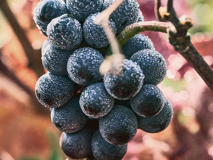 Wines of Burgundy, Tuesday 30th March 2021