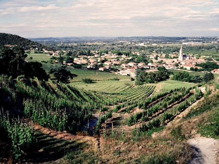 Explore the vintages of the Rhône Valley - Tuition only, Wednesday 10th March 2021
