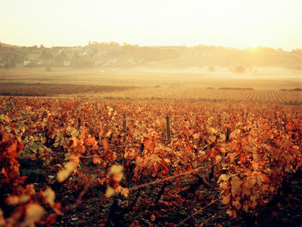 Wines of Burgundy, Tuesday 11th May 2021