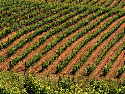 Introduction to Italian wines, Tuesday 25th May 2021