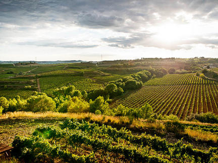 Introduction to the wines of Spain, Tuesday 1st June 2021