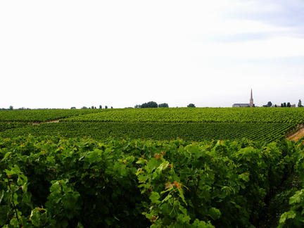 Introduction to the wines of Bordeaux, Tuesday 8th June 2021