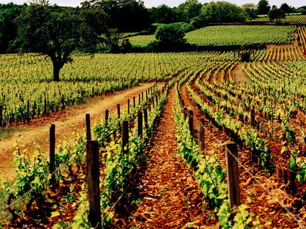 Introduction to the wines of Burgundy, Tuesday 15th June 2021