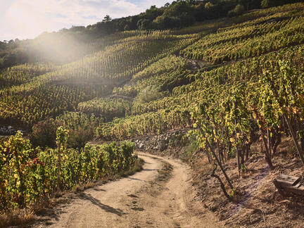 Discover the wines of the Rhône Valley, Friday 28th May 2021