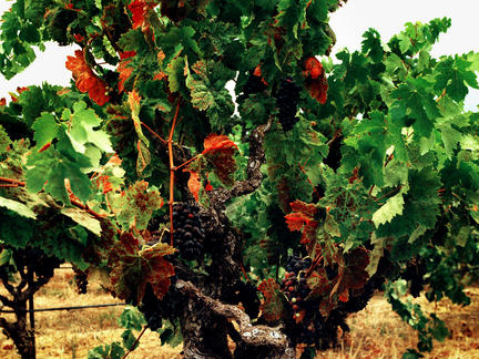 Introduction to the wines of California, Friday 11th June 2021