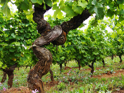 Introduction to the wines of Bordeaux, Wednesday 23rd June 2021