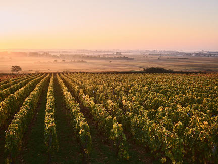 Introduction to the wines of Burgundy, Tuesday 1st June 2021