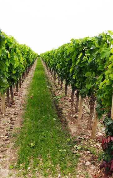 Bordeaux '20 with Mark Pardoe MW: St Estèphe and Pauillac, Thursday 13th May 2021