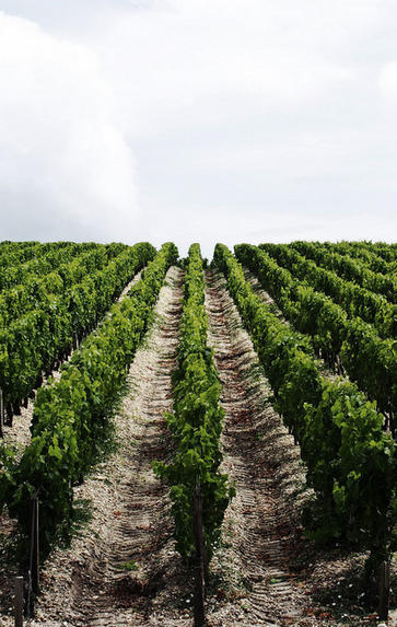 Bordeaux '20 with Mark Pardoe MW: Pomerol and St Emilion, Thursday 27th May 2021